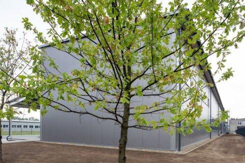 Na tle drzewa hala AiFO